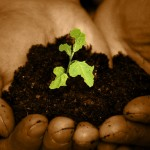 a seedling in earth in a pair of hands with leaves in the shape of the continent of Africa