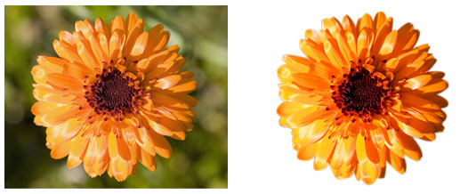 photoshop cut out shape flower