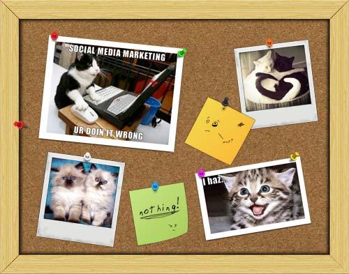 social media lol cats