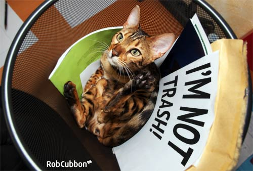 cat in a rubbish bin