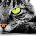 My Passive Income Report