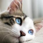 passive income cat