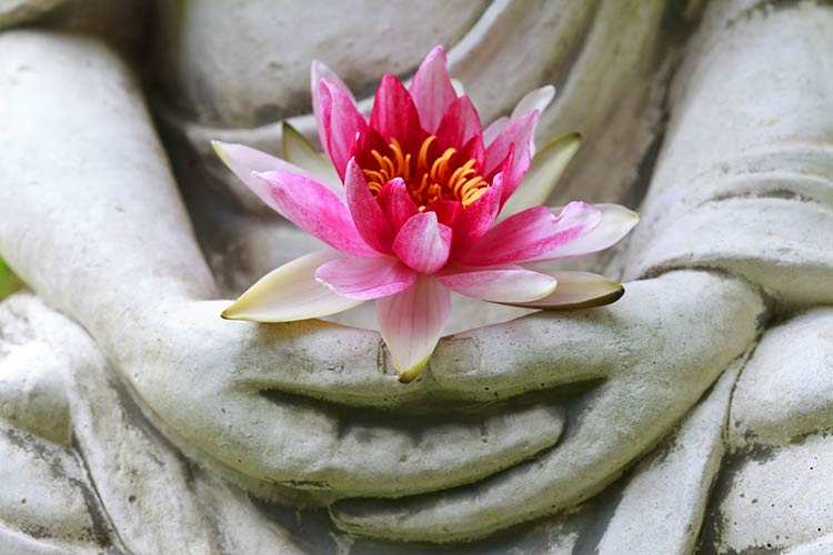 buddha lotus meditation
